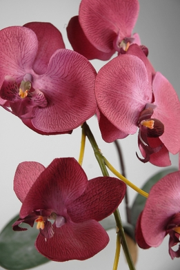 Silk Orchids Magenta Natural Touch Flowers