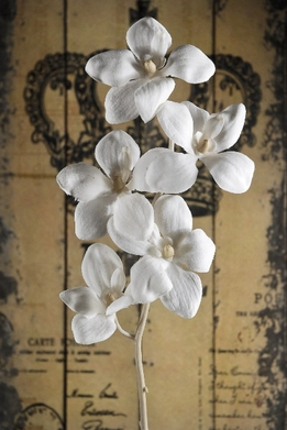 Silk Orchids Vintage White 22""