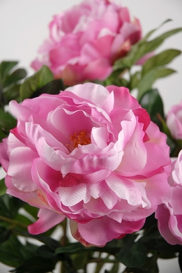 Silk Peony Bush with 6 Large Pink Peonies
