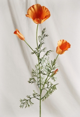 Silk Poppies California Orange Poppy (Pack of 12)