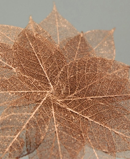 "Skeleton Leaves 1-1/2"" Copper Metallic Leaves (20 leaves/pkg)"