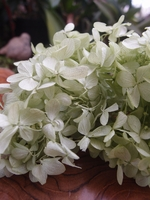 Soft Light Green Preserved Hydrangeas (2 flowers)
