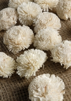 Sola Flower Gilly Flower (pack of 18)