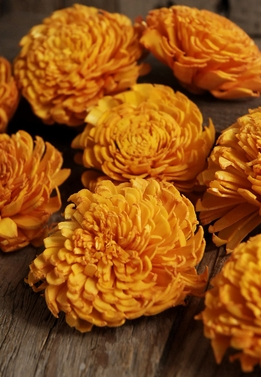 Sola Flowers Orange Carnations (12 flowers/pkg)