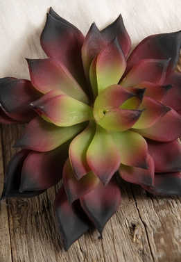 "Succulents Echeveria Natural Touch 4.5"" Green & Burgundy"