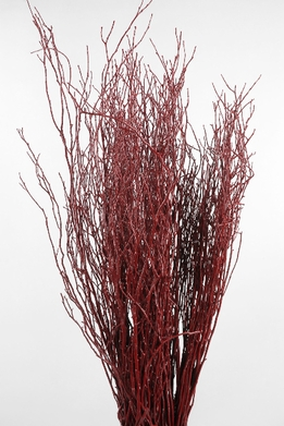 Sweet Red Huckleberry Willow Branches