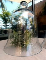 Tall Glass Cloche
