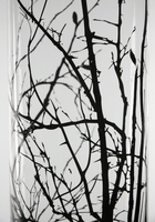 Winter Thicket Glass Cylinder Vase 30in