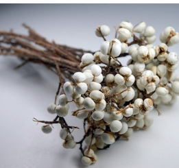 Preserved Texas Tallow Berries (20 stems)