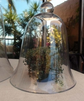 Glass Cloche 11.5in