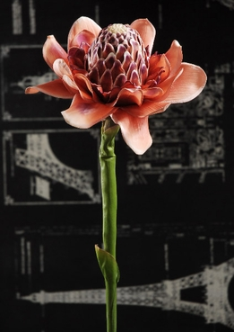 Torch Ginger Red Artificial 34 in.