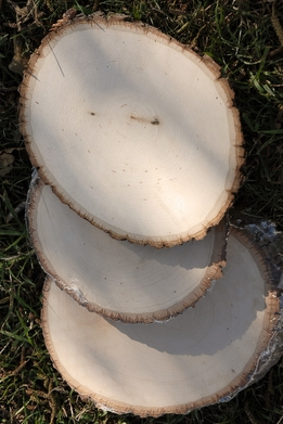 Tree Slices with Bark 10.5-12.5in
