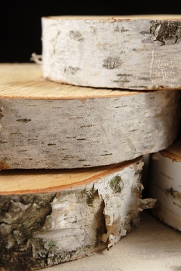 Birch Tree Slices 5-8in