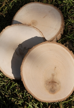 Tree Slices Wood Slabs Round 7-9""