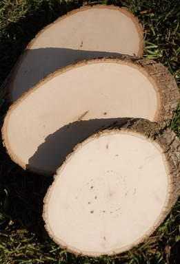 Tree Slices Wood Slabs Thick Cut 7-9""