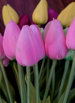 Tulips -Natural Touch &  Silk