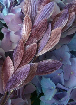 Velvet Leaves Purple Lavender & Rose