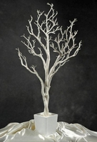 Potted White Wedding Tree 4ft