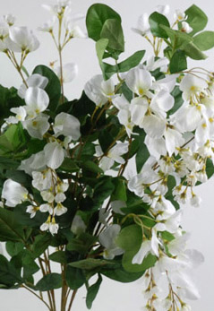 White 26 in. Wisteria Hanging Flowers 25 vines