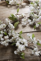 White Cherry Blossom Garlands 6.5 feet