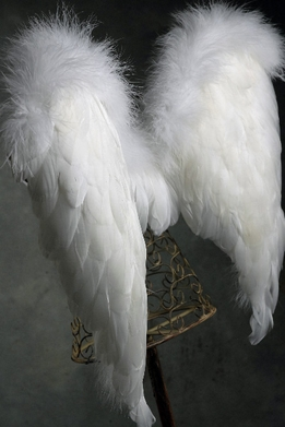 Angel Wings White Feathers