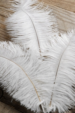 White Ostrich Feathers 3 Feathers on Wire