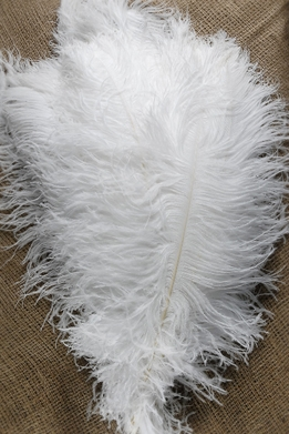 White Ostrich Feather Plumes 22-28in (1/2 lb)