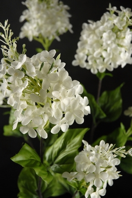 "White Silk Lilacs 29"" tall"