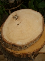 Irregular Tree Slices with Bark (12-16in)