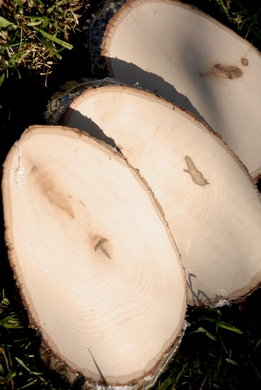 "Wood Tree Slices with Bark ( 7-10.5"")"
