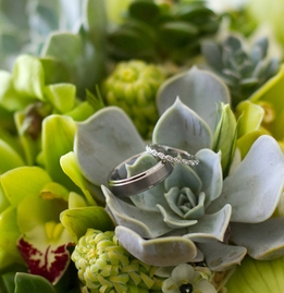 Woodland  Botanicals, Succulents