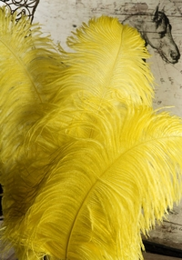 "Yellow Ostrich Plumes 18-24"" Highest Quality (50 feathers)1/2 lb."