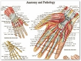 Anatomical Charts
