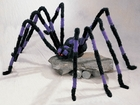 Giant Purple & Black Hairy Spider