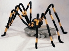 Giant Yellow and Black Hairy Spider