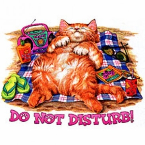 Cat T-shirt - Do Not Disturb Funny Adult Tee