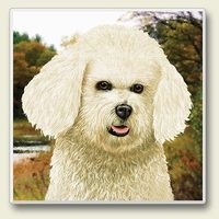 "Absorbent Single Tile Coaster - ""Bichon"""