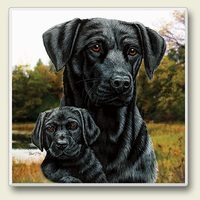 "Absorbent Single Tile Coaster - ""Black Lab"""