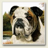 "Absorbent Single Tile Coaster - ""Bulldog"""