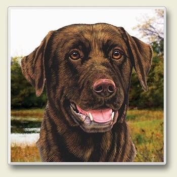 "Absorbent Single Tile Coaster - ""Chocolate Lab"""
