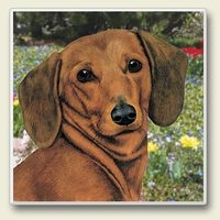 "Absorbent Single Tile Coaster - ""Dachsund"""