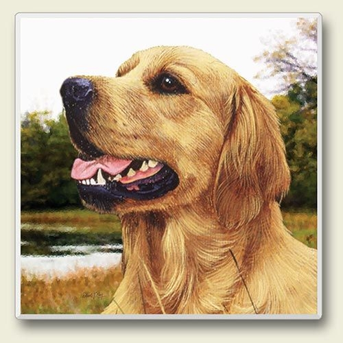"Absorbent Single  Tile Coaster - ""Golden Retriever"""