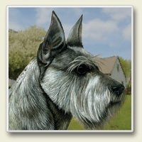 "Absorbent Single Tile Coaster - ""Schnauzer"""