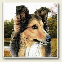 "Absorbent Single Tile Coaster - ""Shetland Sheepdog"""