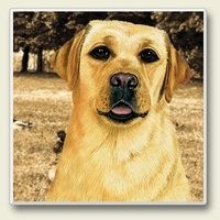 "Absorbent Single Tile Coaster - ""Yellow Lab """