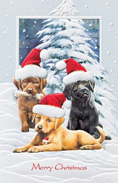 "Boxed Christmas Cards - ""Trio Of Trouble"""
