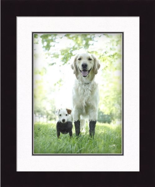 Framed Dog Pictures by Photographer Ron Schmidt