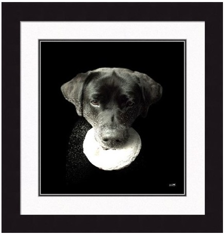 "Framed Picture - ""Homer"" -16"" x 17"""