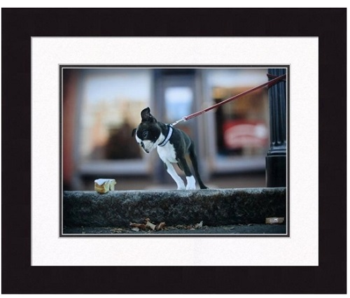 "Framed Picture - ""Sugar"" - 20"" x 16"""