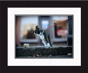 """Framed Picture - """"Sugar"""" - 20"""" x 16"""""""